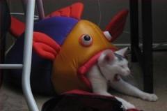 【お題日記】あなたが好きな魚はなんですか?