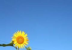 夏の名残りか・・・晴天です。