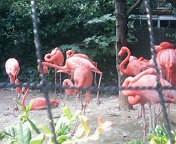 上野動物園に行ってきました★