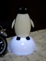 帰宅したらペンギンが居るΣ(゜m゜=)
