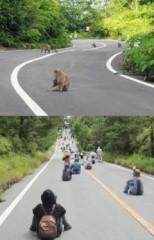 沖縄に新種の動物が発見されました。