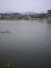 今日は、友人と瀬田川沿いをウオーキング