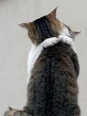 猫にこんにちわ