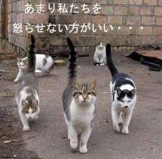 子猫の逆襲