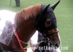 勝ち馬の法則