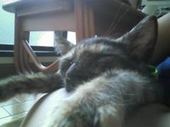 家の猫ちゃん