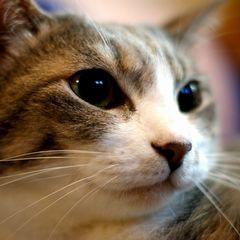 猫好きの男子はスローラブ?