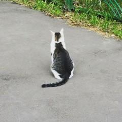 【お題日記】あなたは猫好きですか?