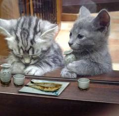サラリーマン猫