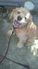 パディの犬生