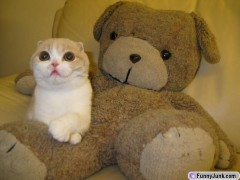 kitty & teddy