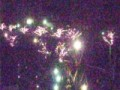 冬の夜の桜