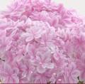 【お題日記】自分を花に例えるとどんな花?
