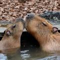【お題日記】動物園で1番好きな動物は?
