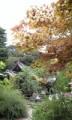 四国82番 根香寺 -すっかり秋やね-